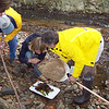 10.2.11 Water Quality Testing at Bascom Creek in Elkridge, Md. : CIS Event!  (better known as Creek Scene Investigation)   On a chilly Monday afternoon, PHG member volunteers joined forces with Howard Community College for the first fall CSI (creek scene investigation) along a section of Deep Run known as Bascom Creek, located in Elkridge, Maryland.  Five volunteers scooped up samples of macroinvertrabrates (better known as &quot;critters&quot;) they discovered to help determine this stream's quality.  Special thanks to our volunteers:  HCC Professor Debby Luquette, her wonderful honors biology student, Jaelyn Bos, Dave Hutton, Pat Hatton and Betsy McMillion!  Come and join us for our &quot;CSI&quot; workshop coming up on October 29th!