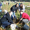 11.21.09 Chestnut Tree Grove Planting near Rockburn Branch : 