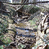 3.20.09 Stream Investigation of Bull Run in Catonsville :