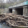 "3.21.12 Patapsco River McKeldin Area Recon by Stream Watcher Lauren Gaasch : Brand new stream watcher Lauren Gaasch walked her stretch of the Patapsco River in the McKeldin Area of Patapsco State Park and notes ""First visit to stream watching area.  Started at the end of Henryton Road where it dead-ends at the Patapsco River and walk downstream on the right bank toward Marriottsville Road.  I got as far as the CSX railroad bridge and had to turn around due to time constraints.  Visibility was very good as it's early spring.  My goal was to get a feel for the expanse of the area before vegetation obscured the view.  My impression of the area was that it was remarkably clean.  While there was some litter and a few tires, generally, it was clean.  The stream seemed full and running well. Other than the railroad I didn't see any utility lines or pipes near this section of the river.  While on the walk, I encountered two horseback riders and about 25-30 hounds on the watch. Got the feeling they weren't supposed to be there.  The one problem area I did see was at the CSX bridge down river.  The following two pictures show the log jam in front of the CSX bridge.  Information and photos were forwarded to our park friends to ask if we could help.  Thanks, Lauren, for a great report, and keep up the great stream watching!"