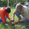 4.17.10 Tree Planting in Patapsco State Park near Historic Belmont in Elkridge : 